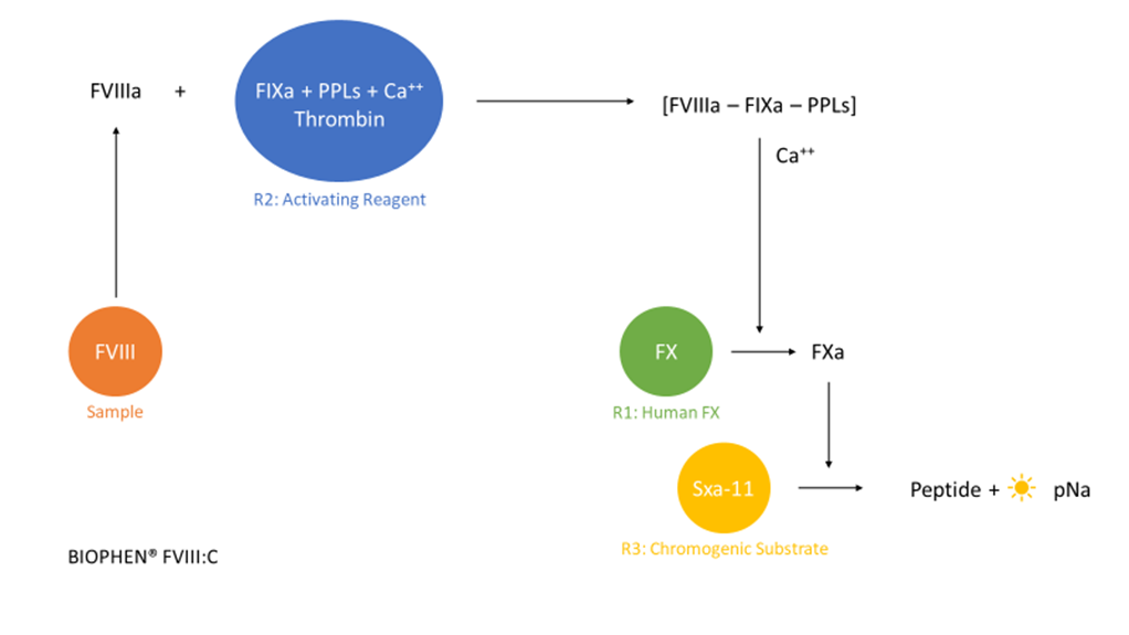 Biophen FVIII coagulation cascade